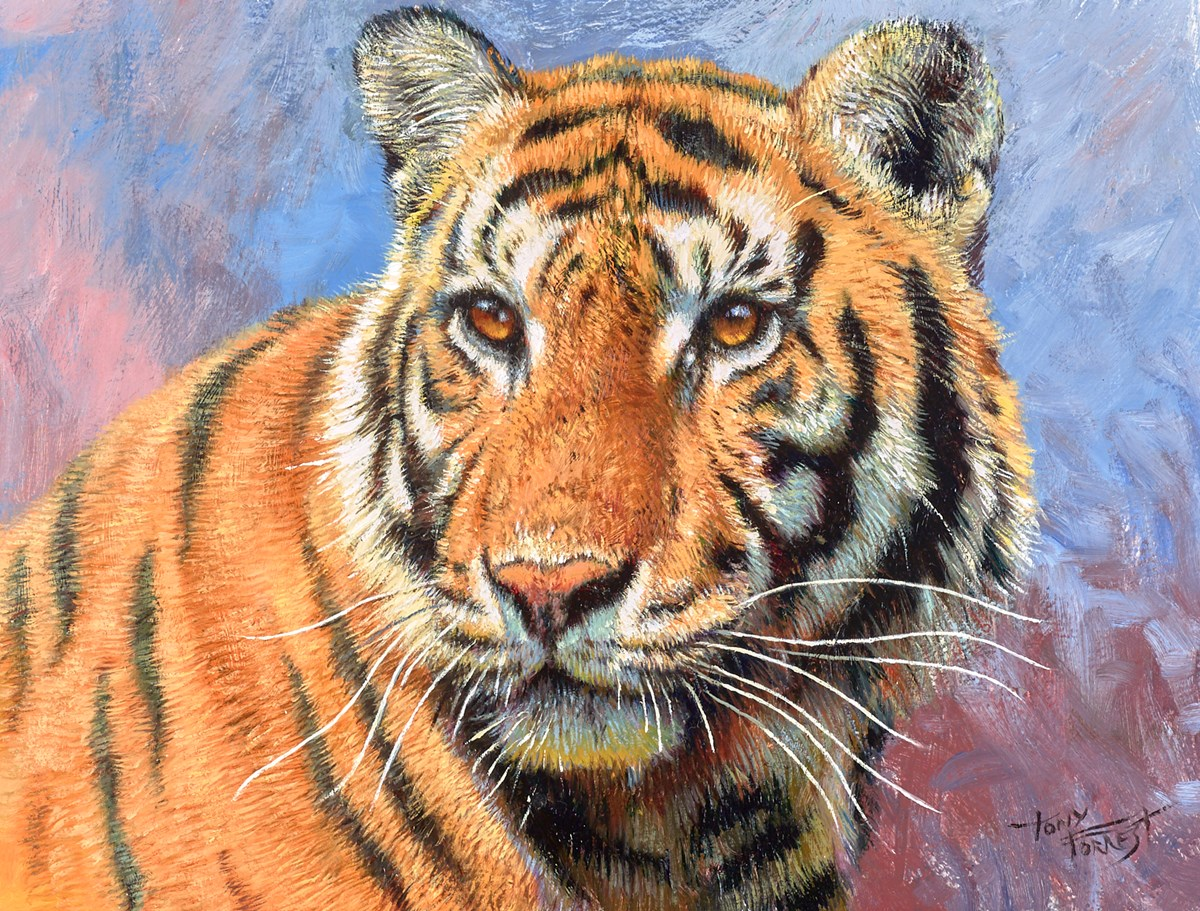 Tiger Study I